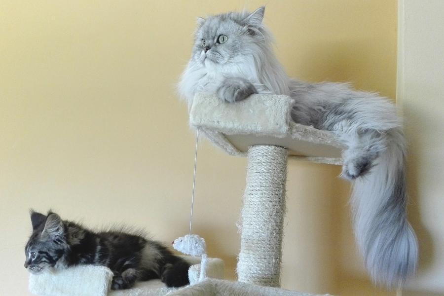 Drapak dla kota – jaki kupić? Wybieramy najlepszy drapak dla kota