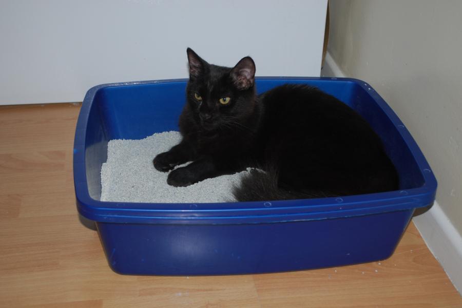 Kuweta dla kota – jaką kupić? Kuweta dla kota odkryta, zamykana, czy samoczyszcząca kuweta dla kota?