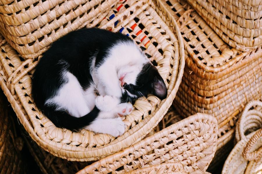 Legowisko dla kota – jakie wybrać? Wybieramy najlepsze legowisko dla kota