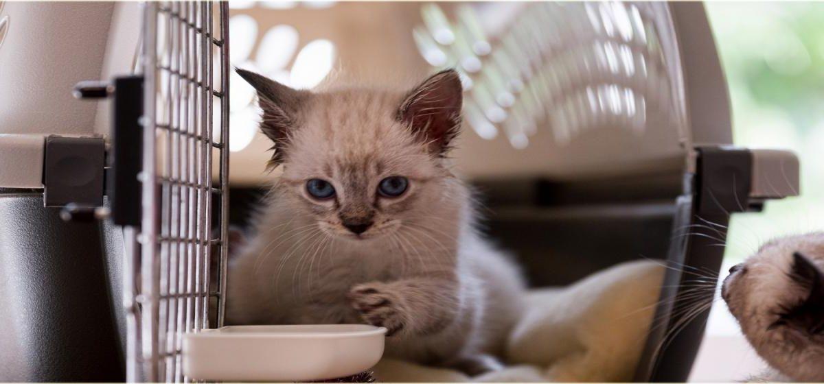 Transporter dla kota – jaki kupić? Wybieramy najlepszy transporter i klatkę dla kota
