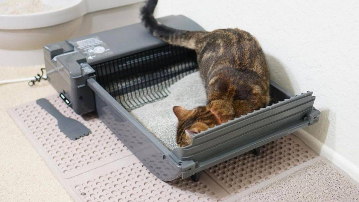 Żwirek dla kota – jaki kupić? Żwirek betonitowy, silikonowy czy drewniany?