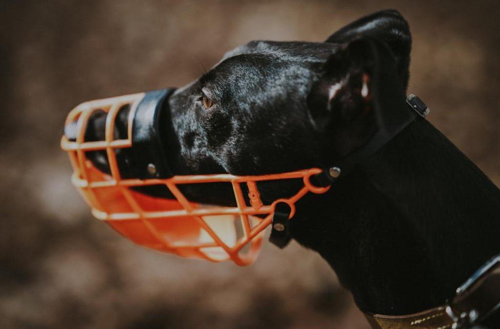 Rodzaje kagańców dla psa – wybieramy najlepszy kaganiec dla czworonoga