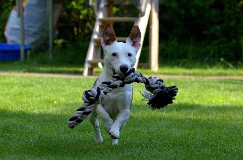 Zabawki dla psa – jakie wybrać?