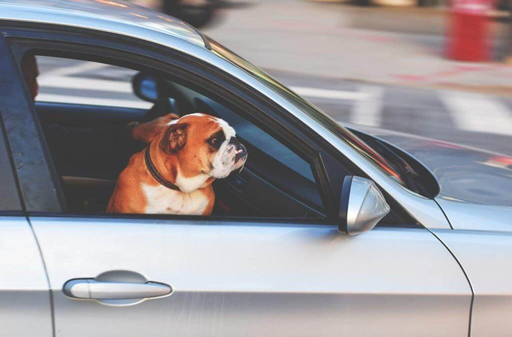 Wybieramy najlepszy transporter dla psa