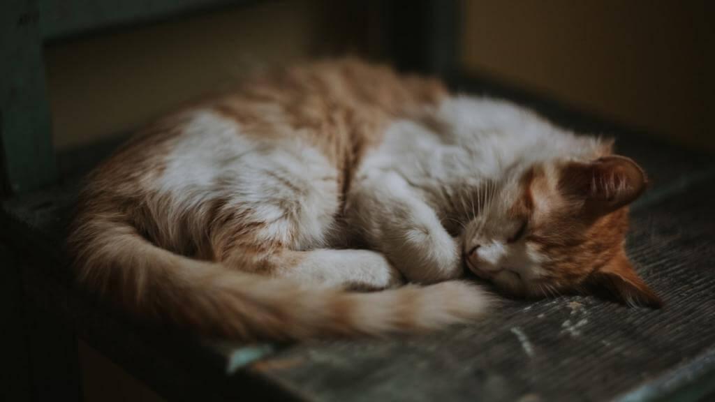 Szampon dla kota – jaki wybrać, jakie będą najlepsze?