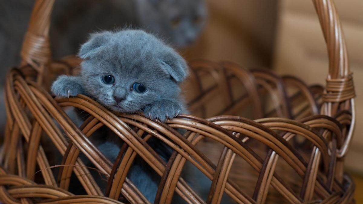 Wyprawka dla kota – co kupić kotu?