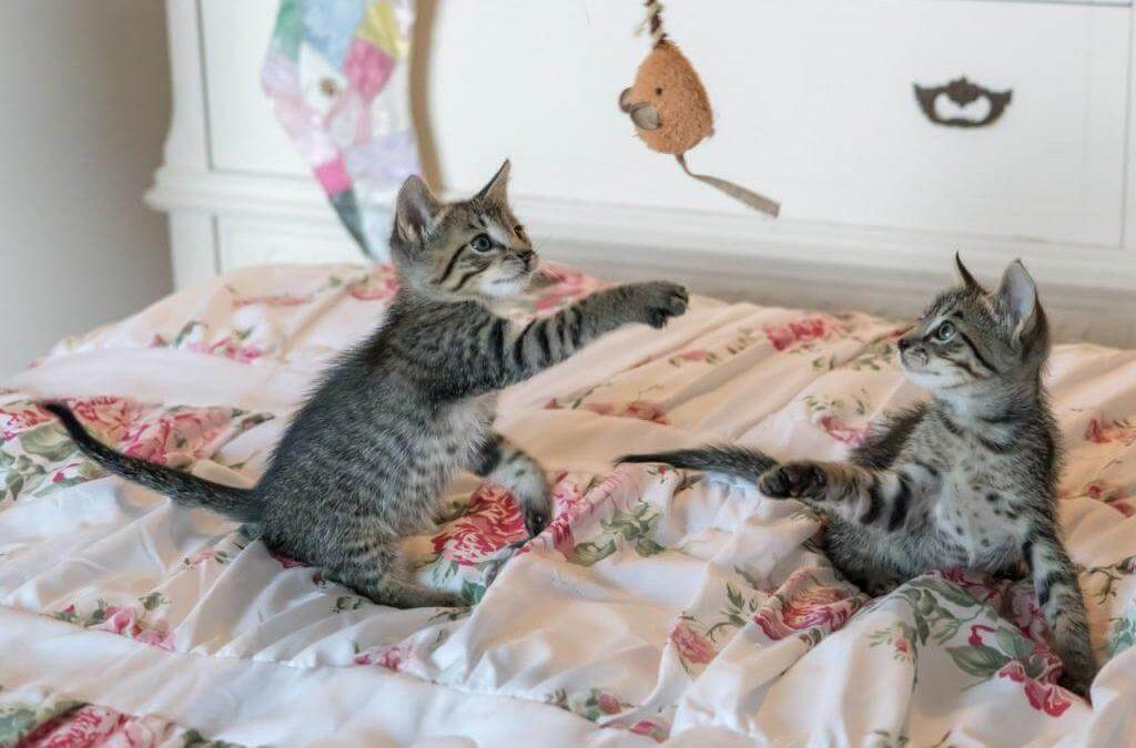 Zabawki dla kota – jakie kupić? Wybieramy najlepsze zabawki interakcyjne dla kota