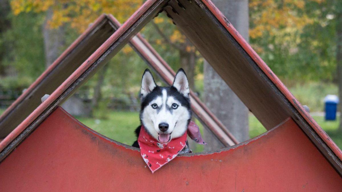 Buda dla psa – jaką wybrać? Buda dla psa z przedsionkiem, oraz buda dla psa z ociepleniem – jak je dobrać?