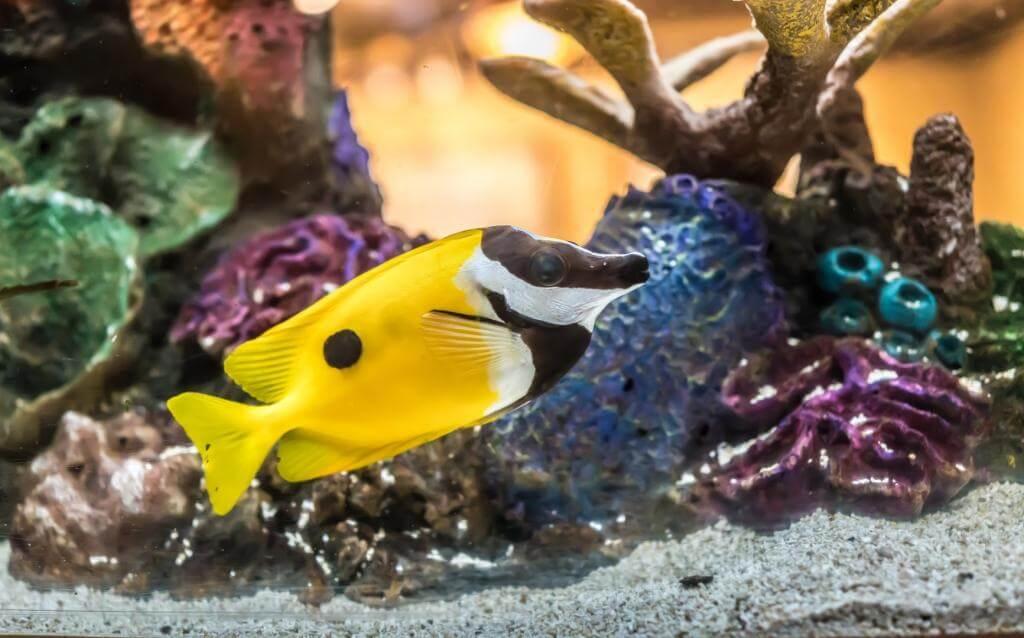 Wybieramy najlepsze dekoracje do akwarium