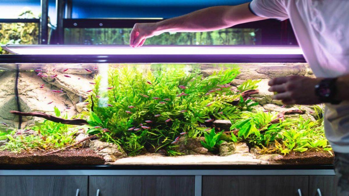 Oświetlenie do akwarium – jaką świetlówkę do akwarium kupić?