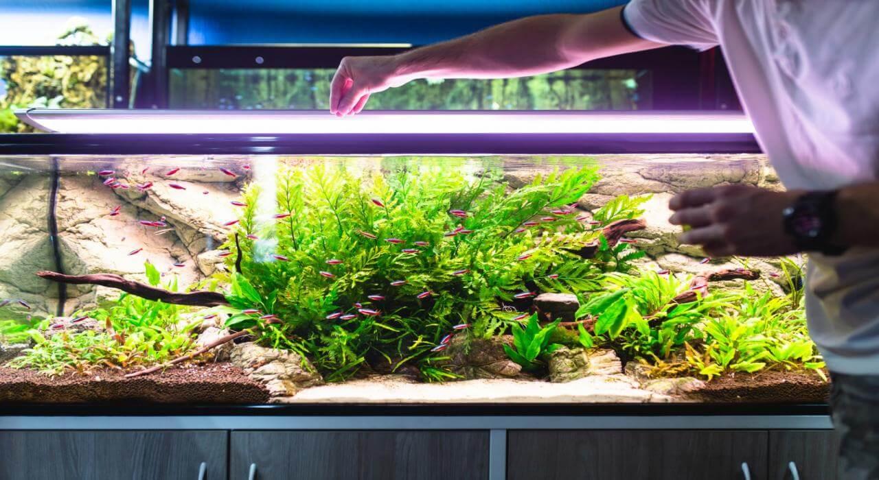 Oświetlenie Do Akwarium Jakie Wybrać Kupić Opinie Cena