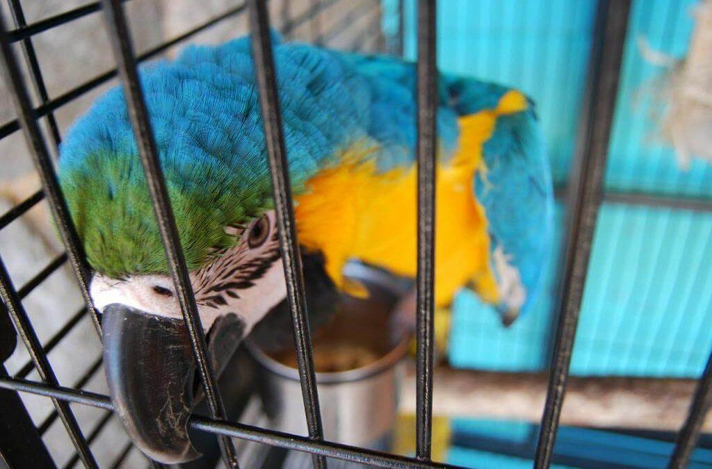 Klatka dla papugi – jaką kupić, oraz gdzie ją postawić? Wybieramy najlepszą klatkę dla papugi