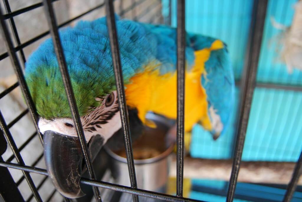 Jaką Klatkę Dla Papugi Wybrać Kupić Opinie Ranking I Cena