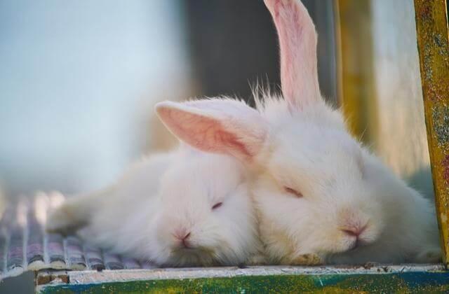 Klatka dla królika – jaką kupić? Wybieramy najlepsze klatki dla królika