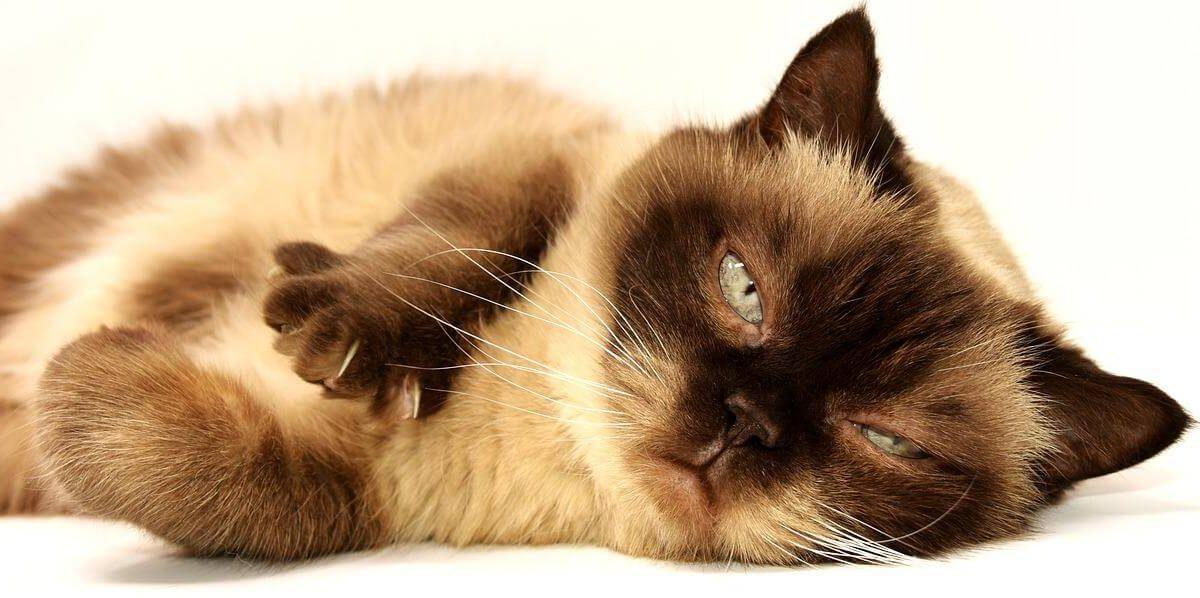 Kocimiętka dla kota – jaką wybra i czym jest? Zabawki z kocimiętką, oraz kocimiętka w sprayu