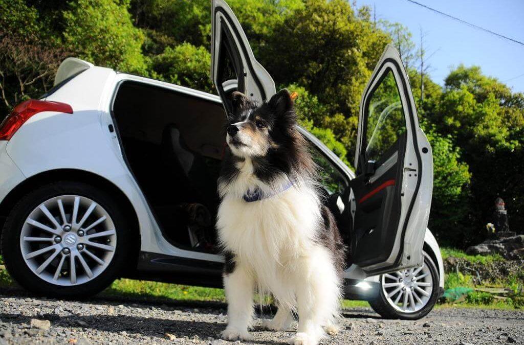 Mata dla psa – jaką wybrać? Samochodowa mata dla psa, oraz chłodząca mata dla psa