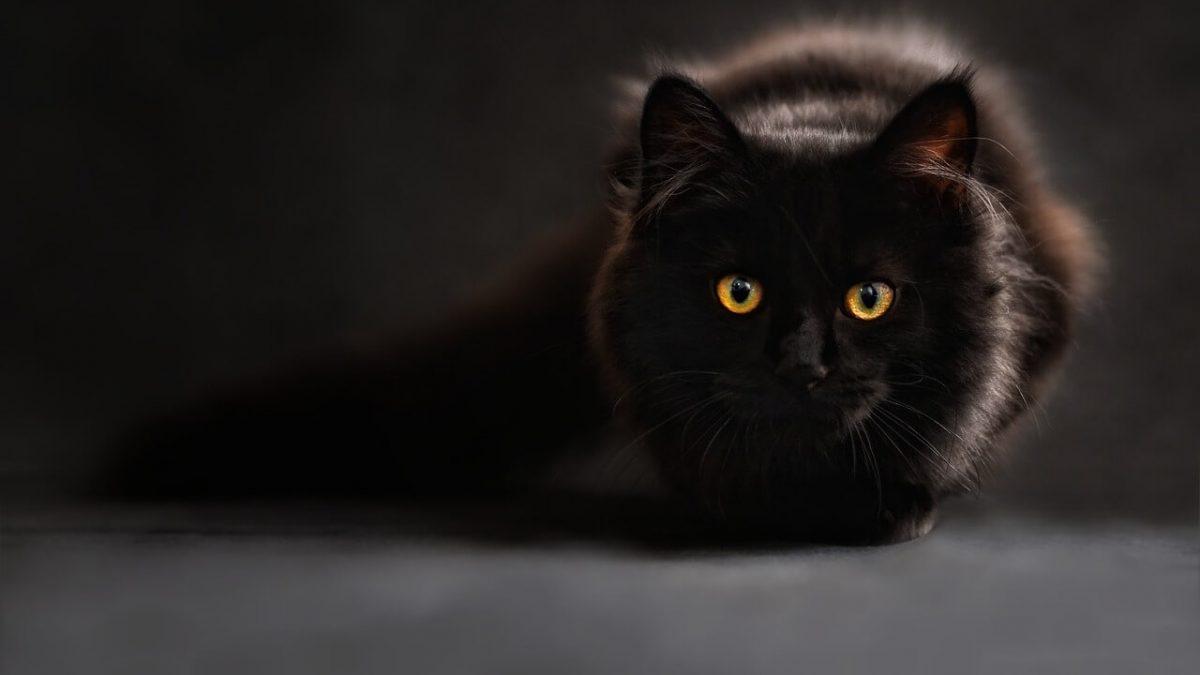 Dlaczego kot miauczy? Co kot chce nam przekazać przez miauczenie?