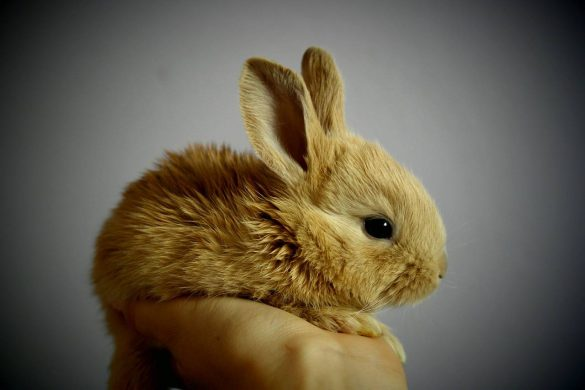 najlepsza karma dla królika