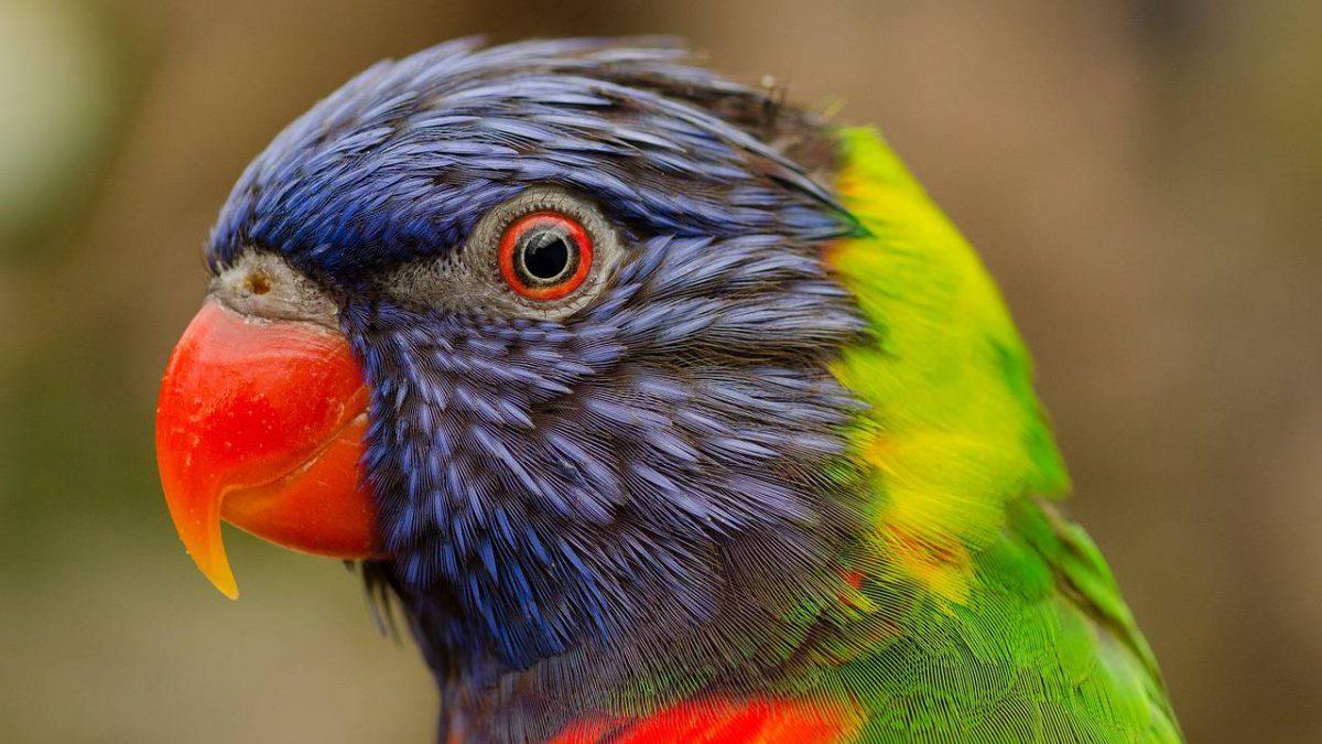 Karma dla papugi – jaką kupić? Wybieramy najlepszy pokarm dla papugi