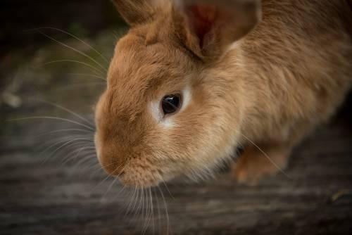 sprawdź jak wybrać najlepszy pokarm dla królika