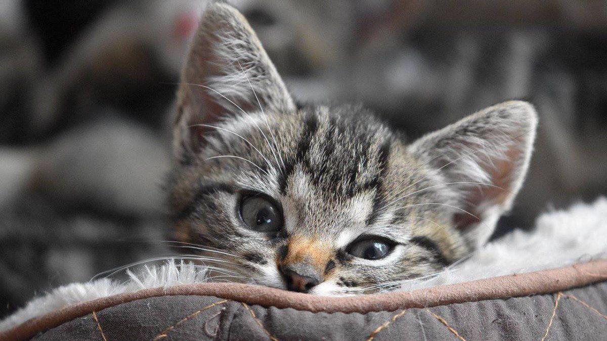 Przysmaki dla kota – jakie kupić? Wybieramy najlepsze przysmaki i przekąski dla kota