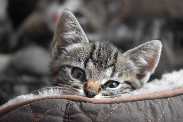 jakie przysmaki dla kota kupić