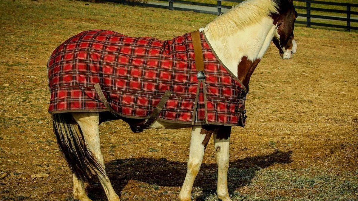 Derka dla konia – jaką kupić? Dlaczego derka dla konia jest tak istotna?
