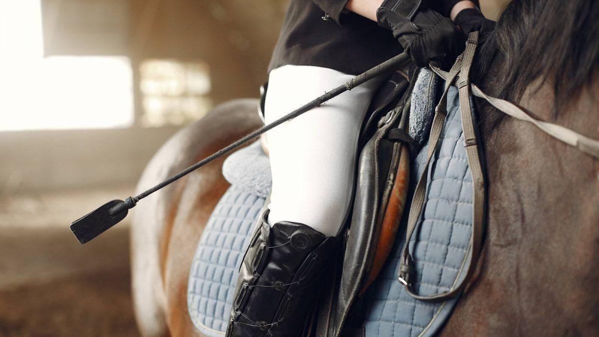 Siodło dla konia – wybieramy najlepsze siodło ujeżdzeniowe