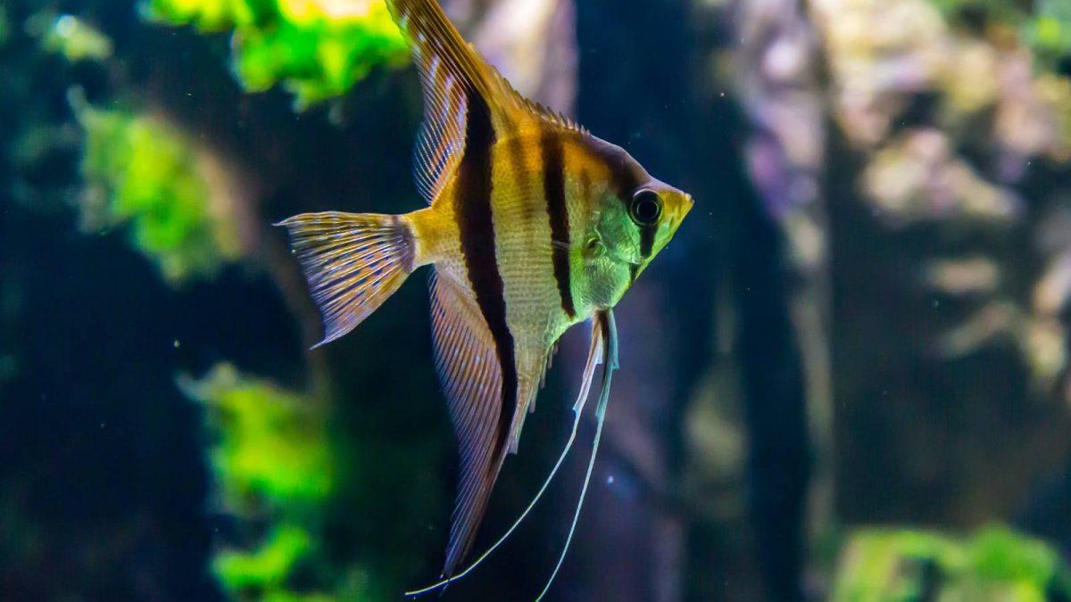 Termometr do akwarium – jaki termometr dla rybek kupić?